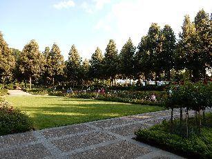 4日目ベルン薔薇公園 (6)