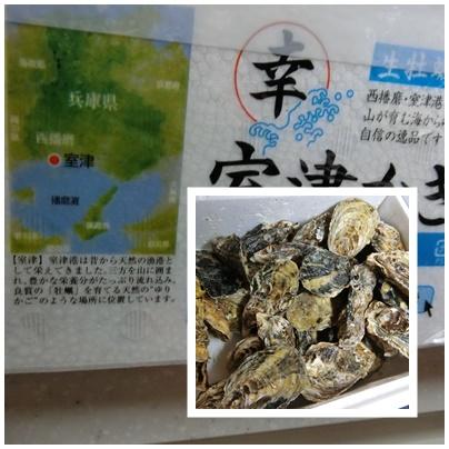 室津牡蠣2