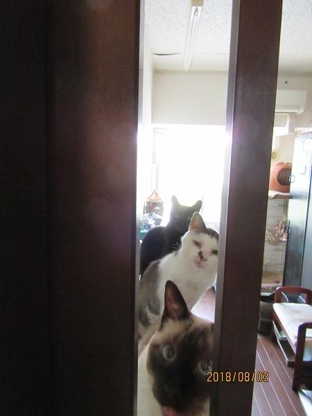 猫部屋3匹