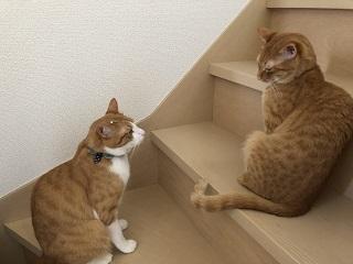 階段の攻防