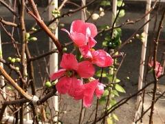 IMG_181125_2318 最寄のバス停に咲いていた紅い花_VGA