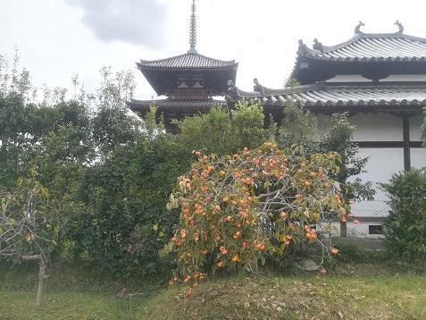10 法起寺の柿