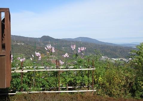 4 明神山の花