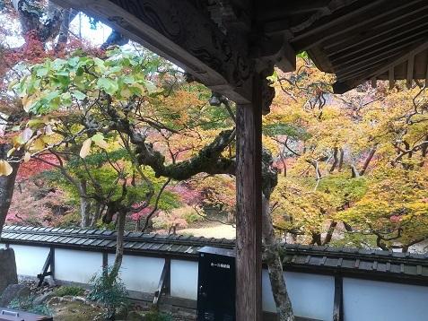 10 正暦寺 福寿院の庭