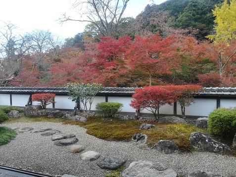 7 正暦寺 福寿院の庭