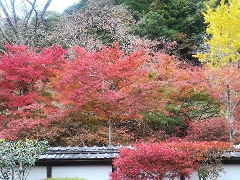 9 正暦寺 福寿院の庭
