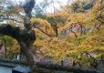 11 正暦寺 福寿院の庭 大