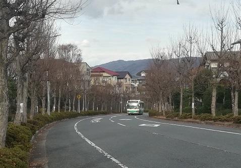 1 住宅街の紅葉はすっかり枯れ枝ばかり