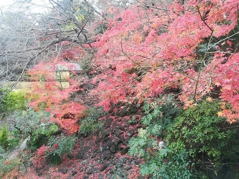 20 露天風呂へ続く階段横の紅葉