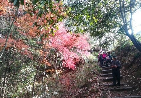 16 下山途中 紅葉が綺麗