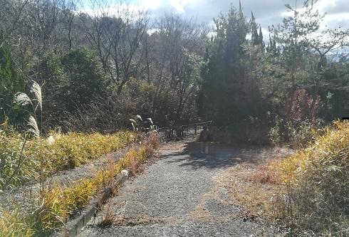 13 コンクリートの道は、鉄の柵で行き止まり