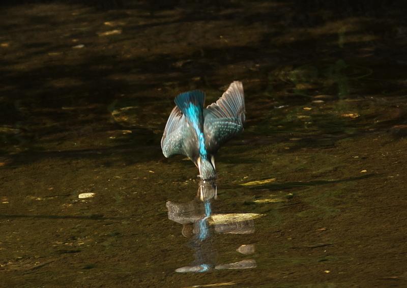 水飛沫 (1)