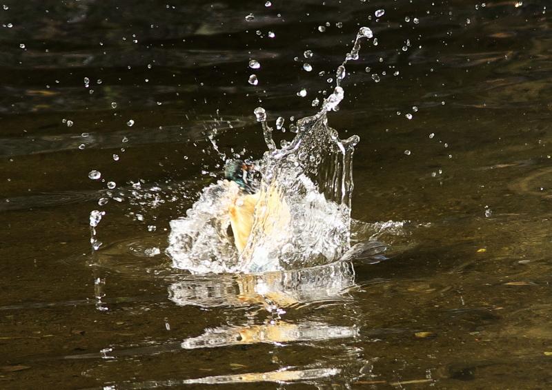 水飛沫 (3)