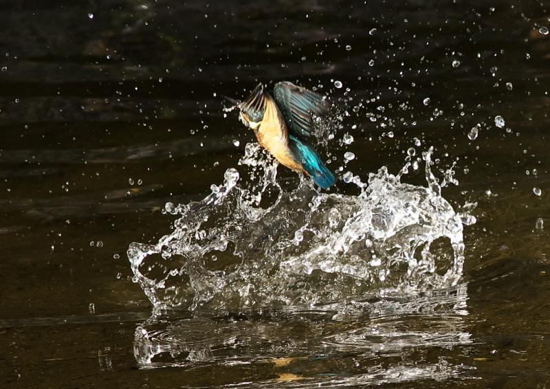 水飛沫 (4)