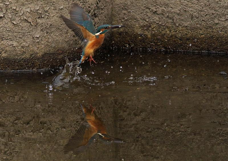 お魚捕り (2)