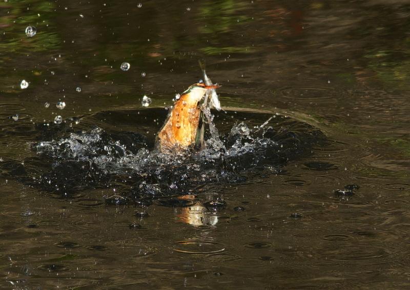 大きな魚 (2)