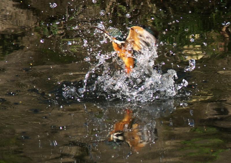 魚なし (3)