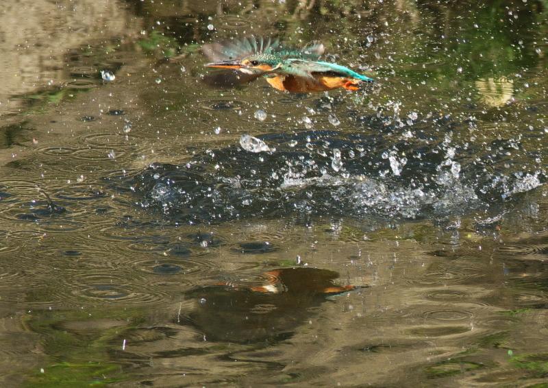 魚なし (4)