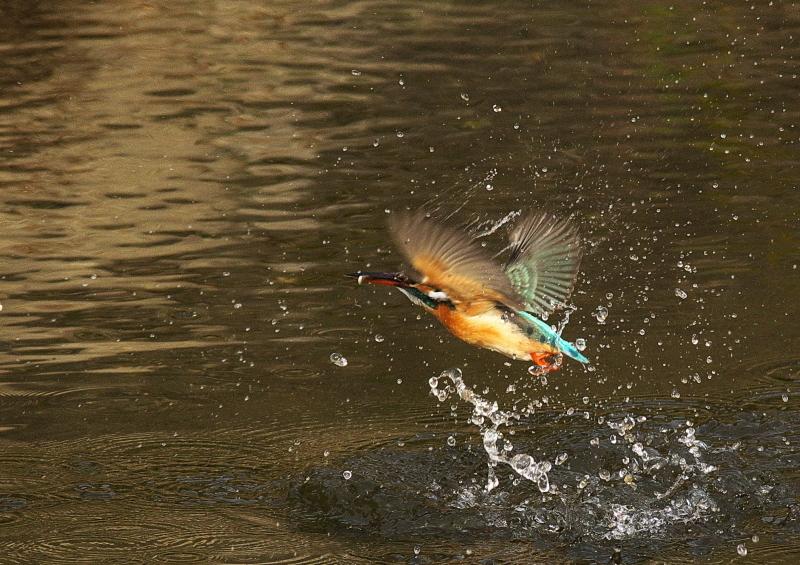 小魚1 (2)