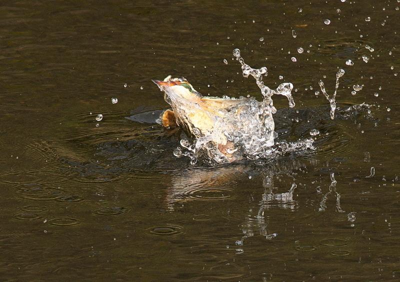 小魚2 (1)