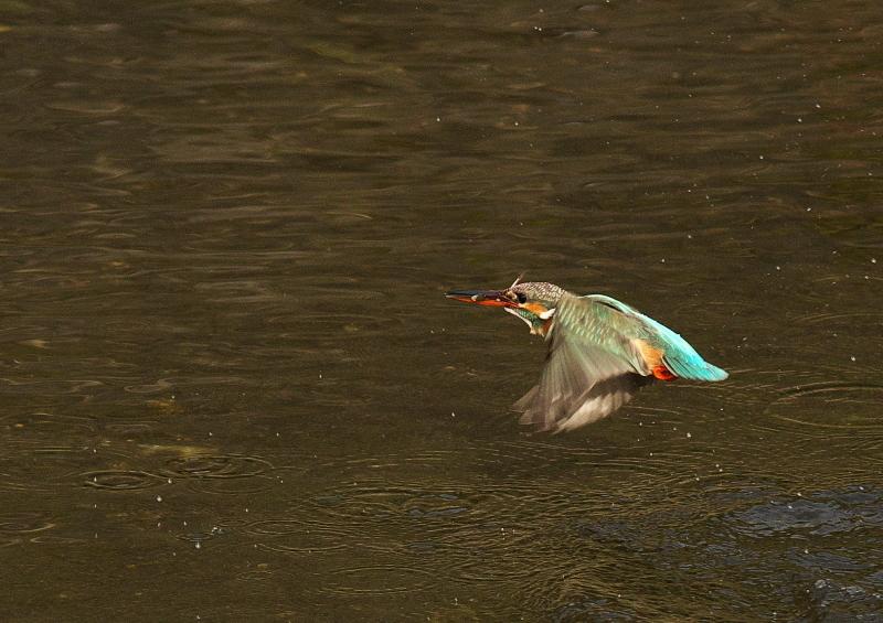 小魚2 (3)