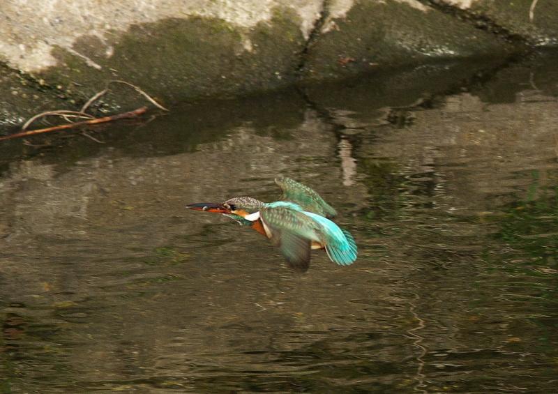 小魚2 (6)