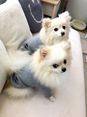 ティアラちゃんとガイくんの可愛い着画Gray②