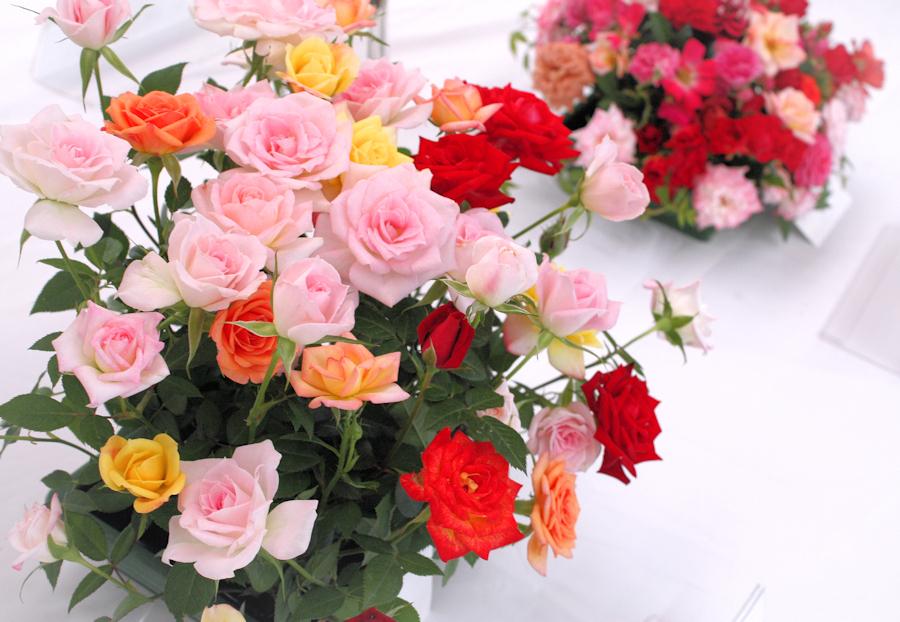 Osaka Rose Exhibition 2018