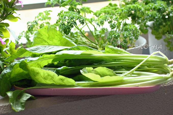 ベラ菜小松菜2