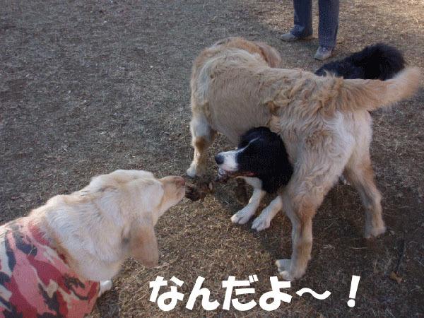 ひっぱりっこ3