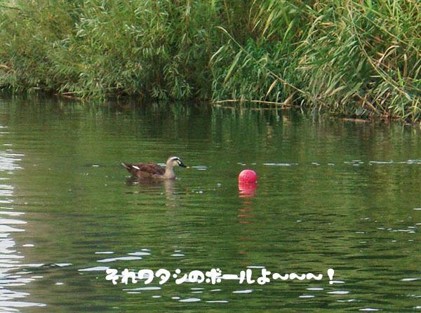 川での初泳ぎ2