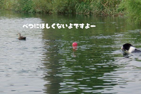 川での初泳ぎ3