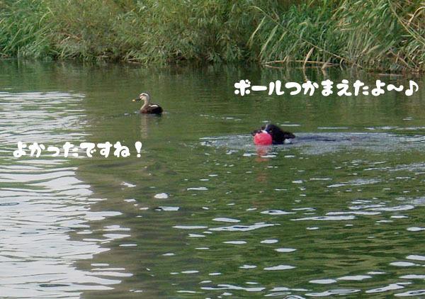 川での初泳ぎ4