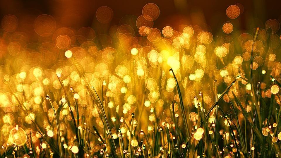 grass-3375344_960_720.jpg