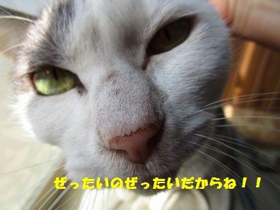 IMG_5198.jpg