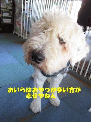 IMG_5514.jpg