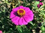 花18301