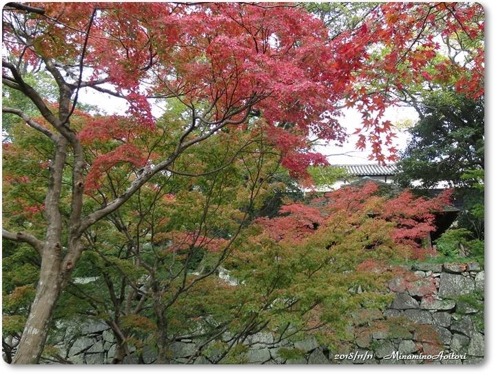 福岡城紅葉 (212)