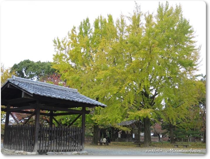 福岡城紅葉 (230)