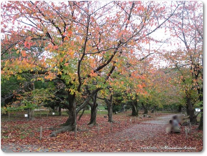 福岡城紅葉 (254)