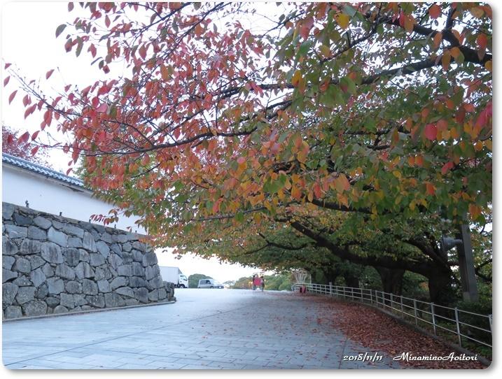 福岡城紅葉 (374)