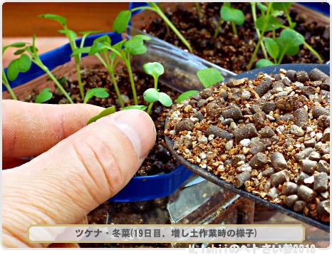 ペトさい(冬菜)13