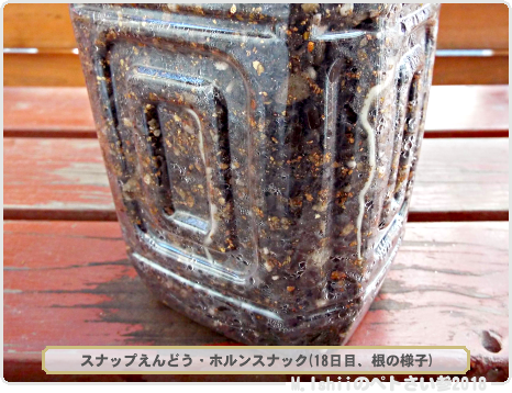 ペトさい(スナップえんどう・改)13