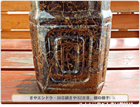 ペトさい(30日絹さや・改)40