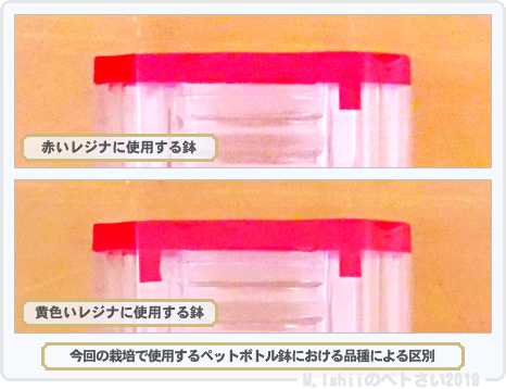 ペトさい(レジナ・Remake)04