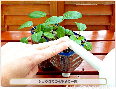 ペトさい(冬菜)30
