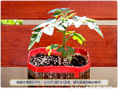 ペトさい(レジナ・Remake)25