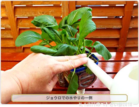 ペトさい(冬菜)36