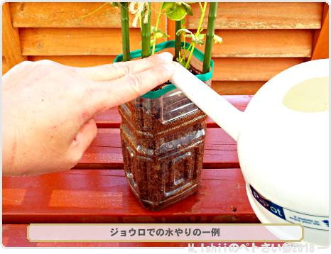 ペトさい(30日絹さや・改)71