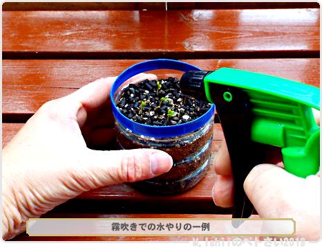 ペトさい(茎ブロッコリー)09
